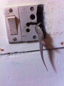Gecko off himself at the Wild Grass Hotel - poor thing!