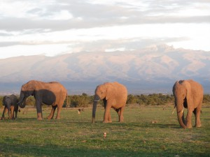 Ol Pajeta Conservancy with it's Mt. Kenya backdrop was a favourite.