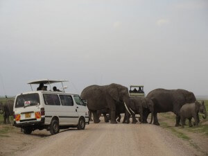 Amboseli had SO many elephants. They were everywhere!