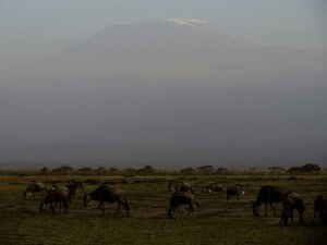 Mt Kilimanjaro view from Amboseli.