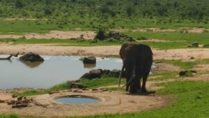 We watched this massive elephant for a long time at the watering hole outside the house.