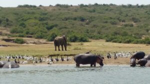 From the boat in Queen Elizabeth National Park.
