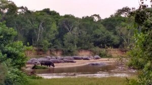 Our favorite camping site of the trip was in Queen Elizabeth National Park, just across the river from the Congo.  Those hippos are in the DRC!