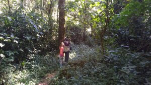 Hiking through Kakamega National Forest with a guide.