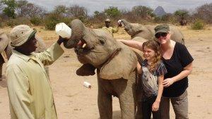 Elephant Orphanage.